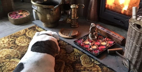 Dog by a cosy fire